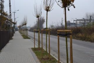 drzewa-garbarska