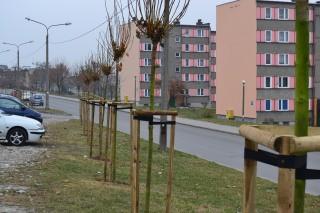 drzewa-osiedle