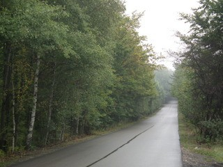 drzewa olkusz - bukowno