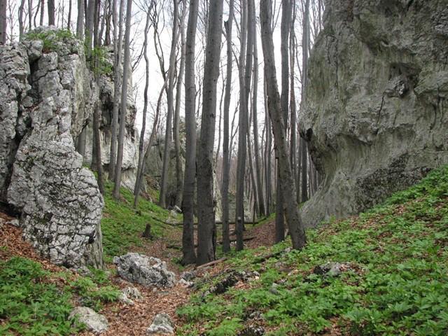 rezerwat pazurek9