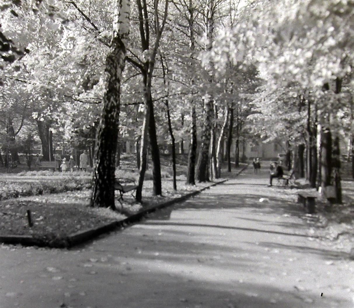 Alejka w parku miejskim.Zdjęcie autorstwa Jana Nosowicza wykonane w latach 60-tych XX wieku.
