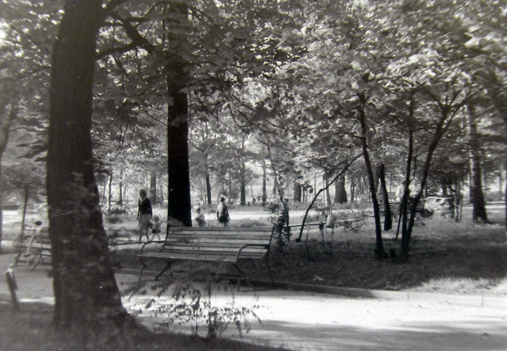 Park miejski w Olkuszu.Zdjęcie autorstwa Jana Nosowicza wykonane w latach 60-tych XX wieku.