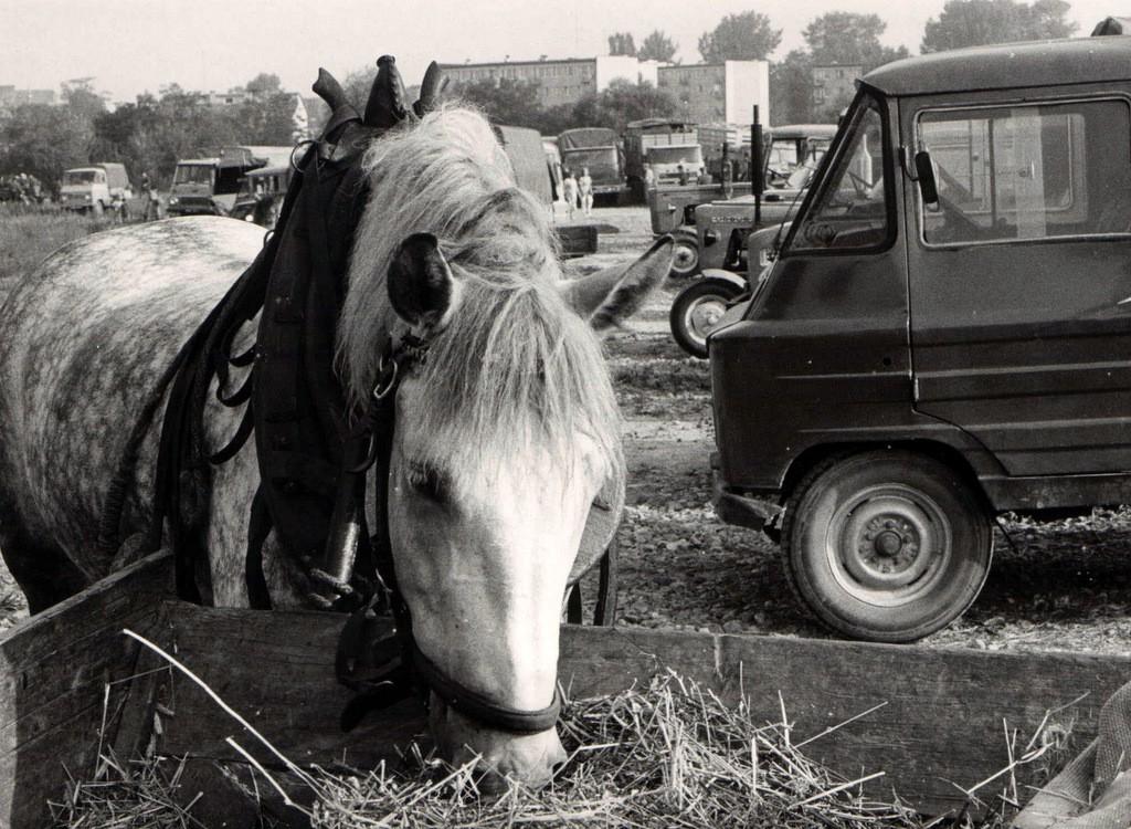 13. Targ koński, lata 80-te. Fot. Jan Nosowicz.