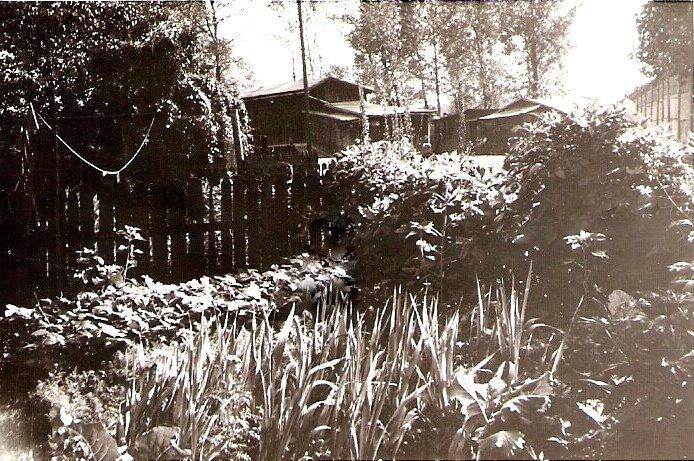22. Ogród przydomowy na Nowym Placy Fabrycznym. Przed domem nr 40. Rok 1965. Fot. Ze zbiorów Ryszarda Maliszewskiego.