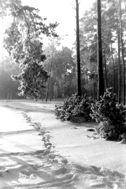 17. Las w okolicach dzisiejszego osiedla Pakuska, połowa lat 70-tych. Fot. Piotr  Nogieć.
