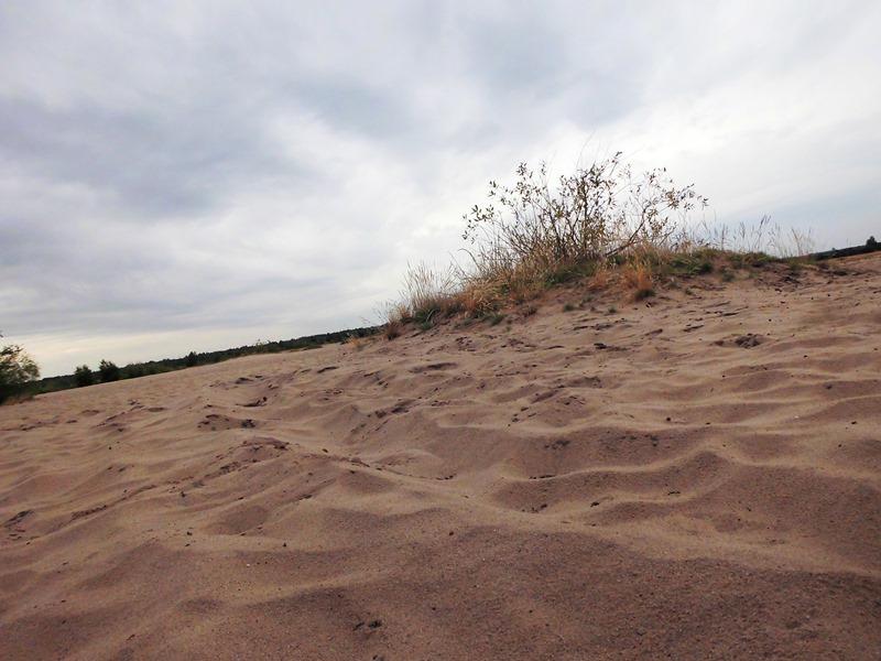 pustynia trawa