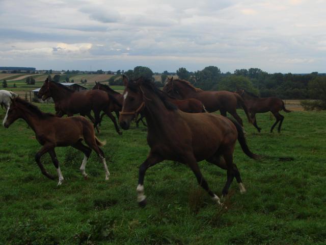 5 udórz stadnina konie