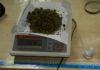 olkusz marihuana1