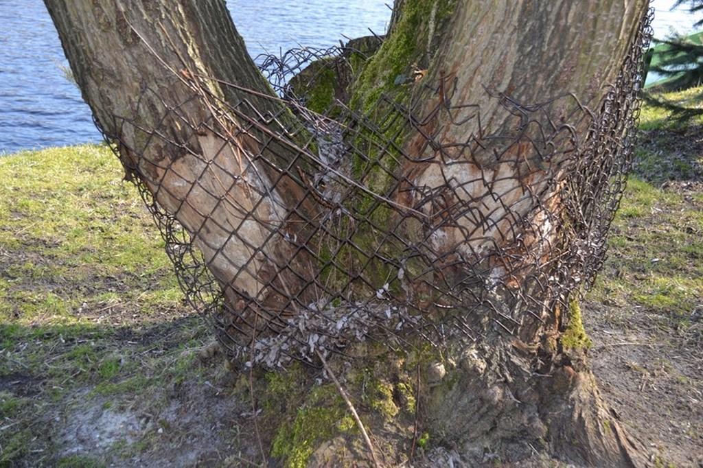 bobry paweł 3 Kopiowanie
