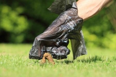 bukowno sprzatanie psiej kupy