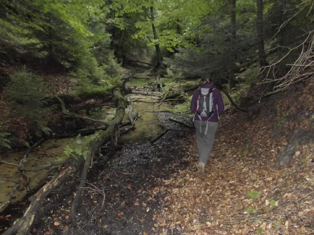 W malowniczej dolince górnej Sztoły. fot
