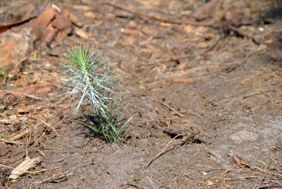 drzewka10