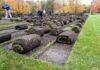 trawa czarna1